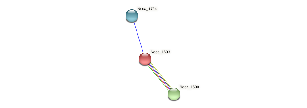 Noca_1593 protein (Nocardioides sp. JS614) - STRING interaction network
