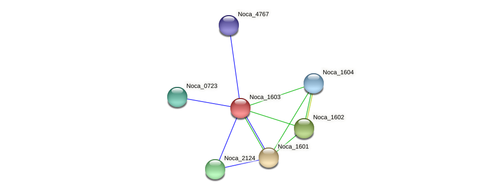 Noca_1603 protein (Nocardioides sp. JS614) - STRING interaction network