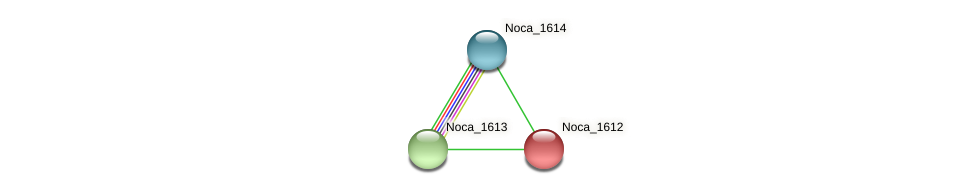 Noca_1612 protein (Nocardioides sp. JS614) - STRING interaction network