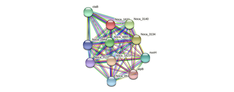 Noca_1622 protein (Nocardioides sp. JS614) - STRING interaction network