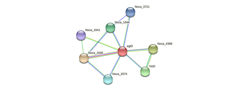 egtD protein (Nocardioides sp. JS614) - STRING interaction network