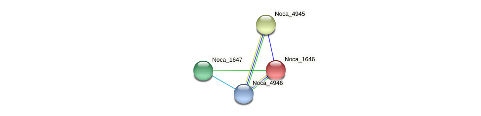 Noca_1646 protein (Nocardioides sp. JS614) - STRING interaction network