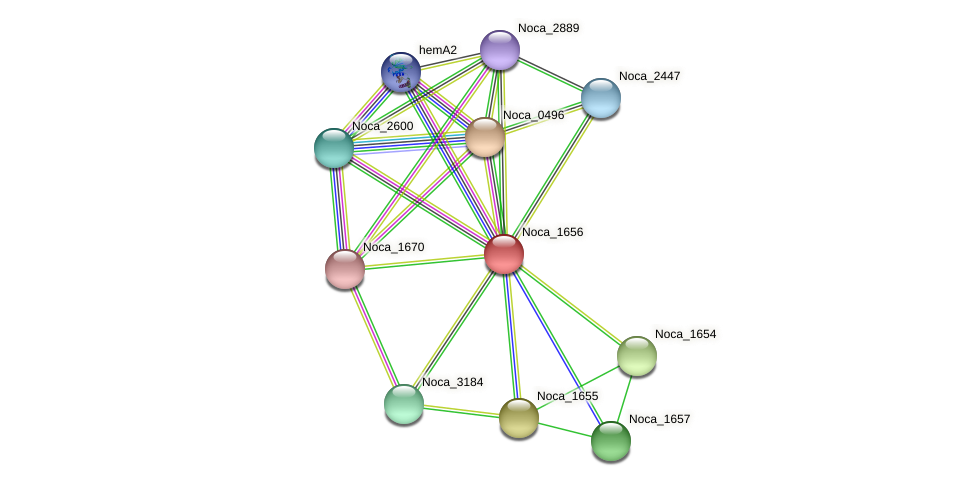 Noca_1656 protein (Nocardioides sp. JS614) - STRING interaction network