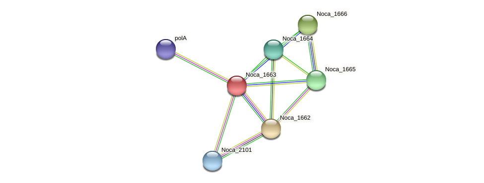 Noca_1663 protein (Nocardioides sp. JS614) - STRING interaction network