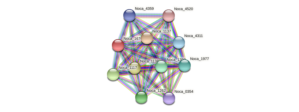 Noca_1670 protein (Nocardioides sp. JS614) - STRING interaction network