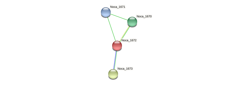 Noca_1672 protein (Nocardioides sp. JS614) - STRING interaction network