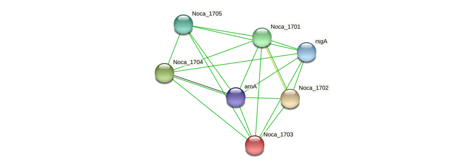 Noca_1703 protein (Nocardioides sp. JS614) - STRING interaction network
