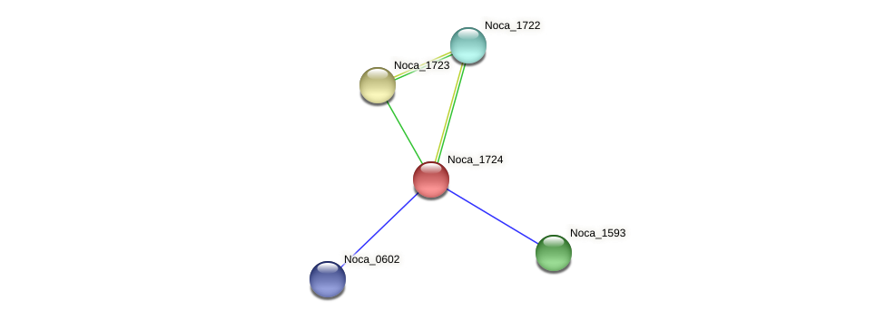 Noca_1724 protein (Nocardioides sp. JS614) - STRING interaction network