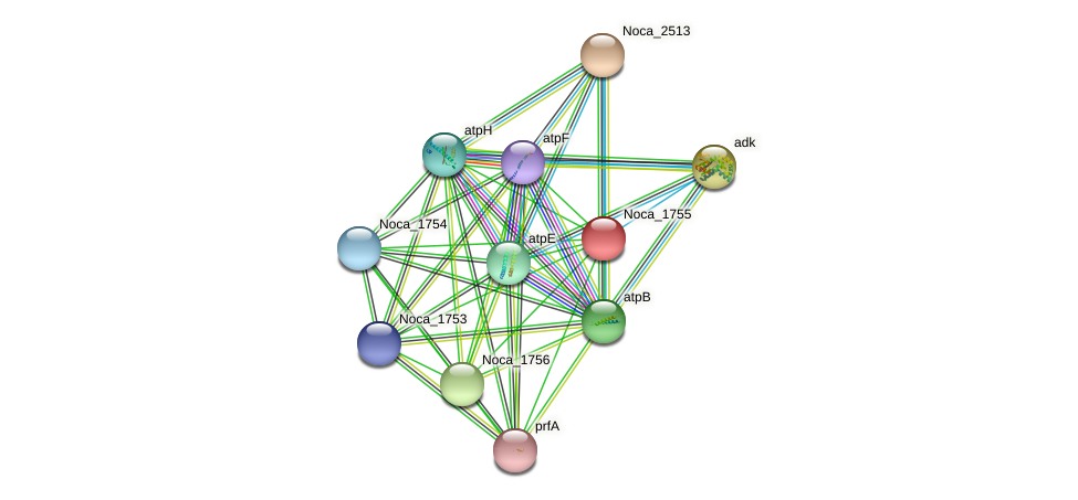 Noca_1755 protein (Nocardioides sp. JS614) - STRING interaction network