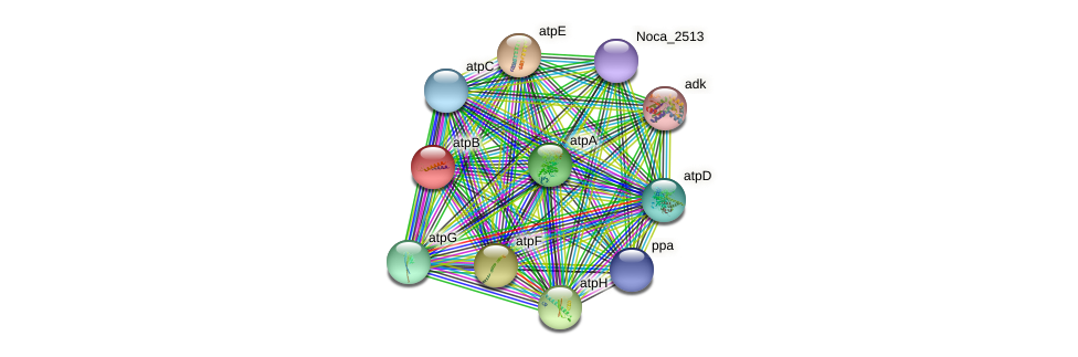 atpB protein (Nocardioides sp. JS614) - STRING interaction network