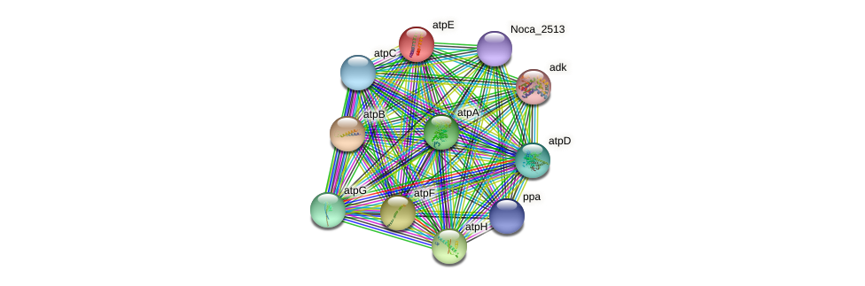 atpE protein (Nocardioides sp. JS614) - STRING interaction network