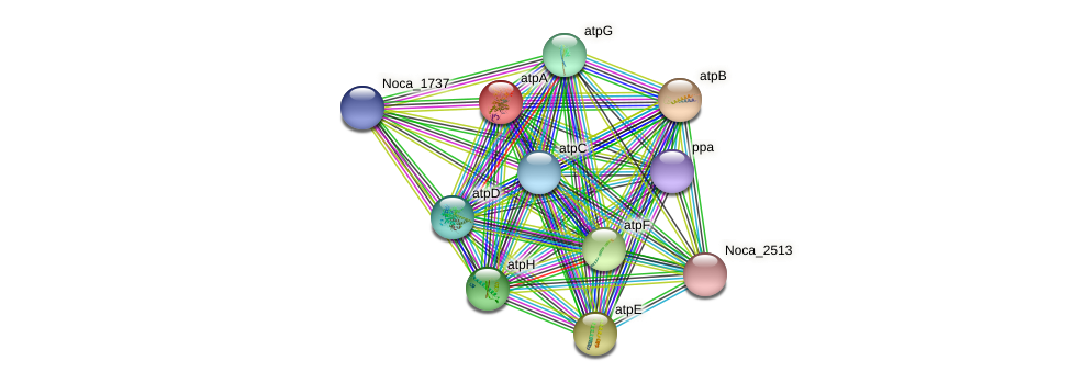 atpA protein (Nocardioides sp. JS614) - STRING interaction network