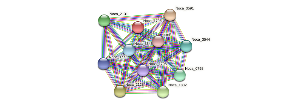 Noca_1796 protein (Nocardioides sp. JS614) - STRING interaction network