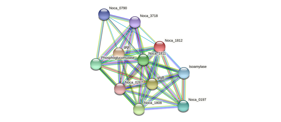 Noca_1812 protein (Nocardioides sp. JS614) - STRING interaction network