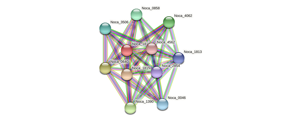 Noca_1816 protein (Nocardioides sp. JS614) - STRING interaction network