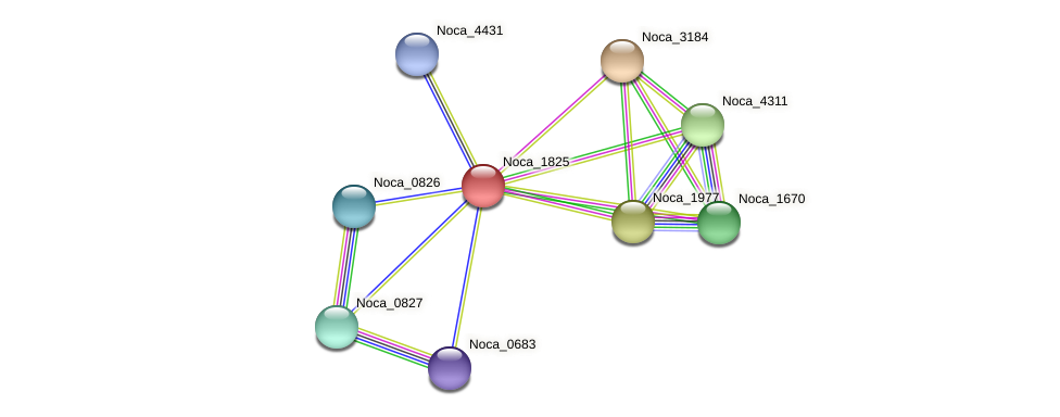 Noca_1825 protein (Nocardioides sp. JS614) - STRING interaction network