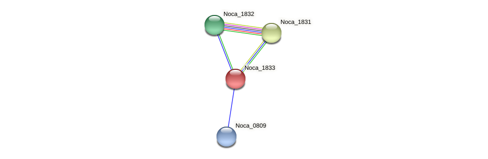 Noca_1833 protein (Nocardioides sp. JS614) - STRING interaction network