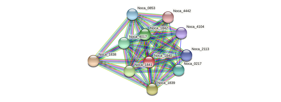 Noca_1840 protein (Nocardioides sp. JS614) - STRING interaction network