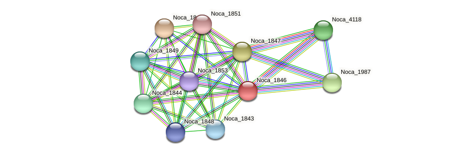 Noca_1846 protein (Nocardioides sp. JS614) - STRING interaction network