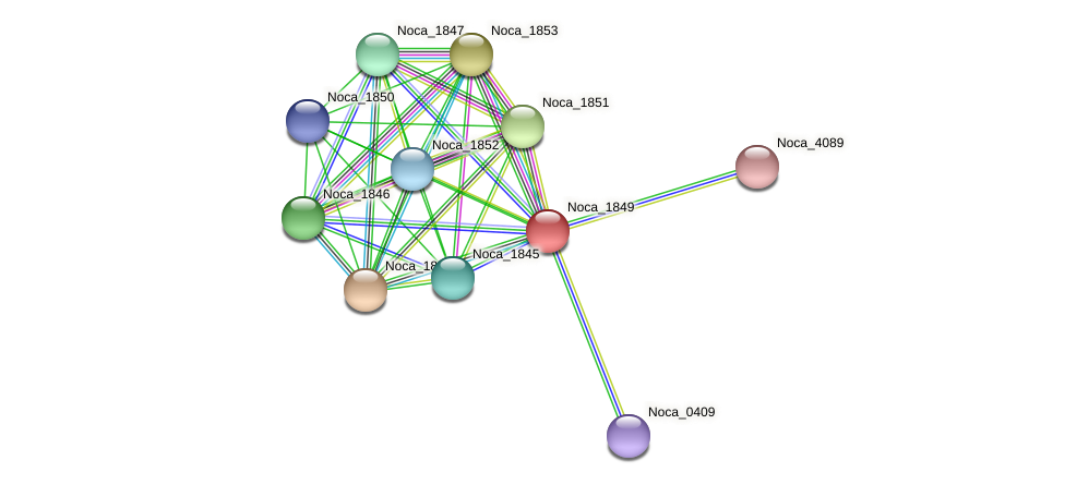 Noca_1849 protein (Nocardioides sp. JS614) - STRING interaction network