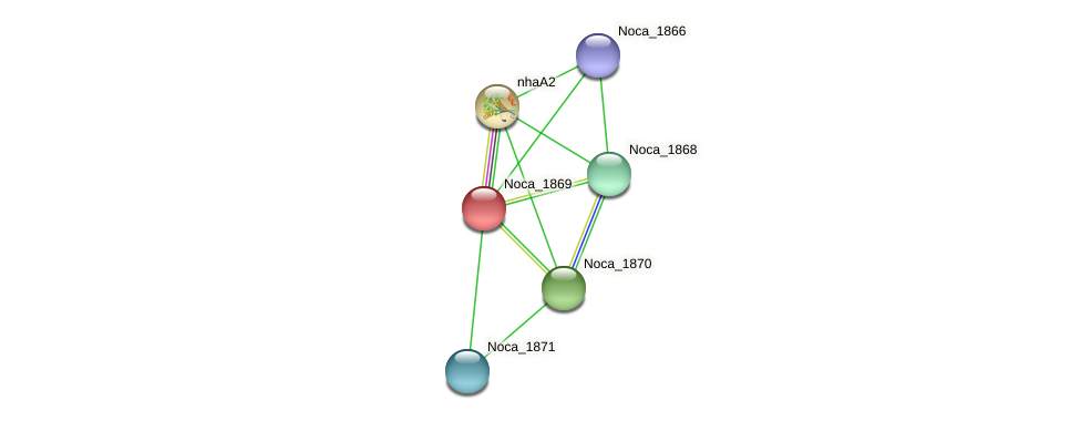 Noca_1869 protein (Nocardioides sp. JS614) - STRING interaction network