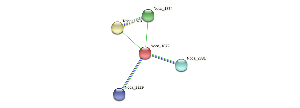 Noca_1872 protein (Nocardioides sp. JS614) - STRING interaction network