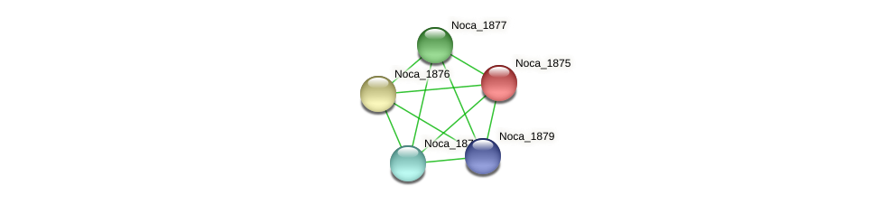 Noca_1875 protein (Nocardioides sp. JS614) - STRING interaction network