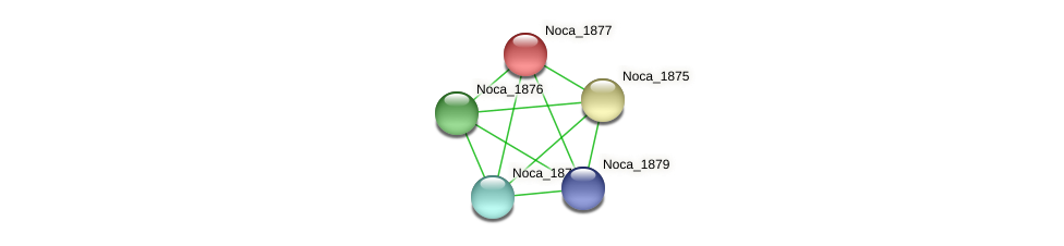 Noca_1877 protein (Nocardioides sp. JS614) - STRING interaction network