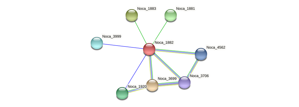 Noca_1882 protein (Nocardioides sp. JS614) - STRING interaction network