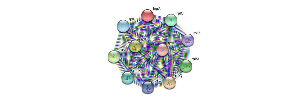 lepA protein (Nocardioides sp. JS614) - STRING interaction network