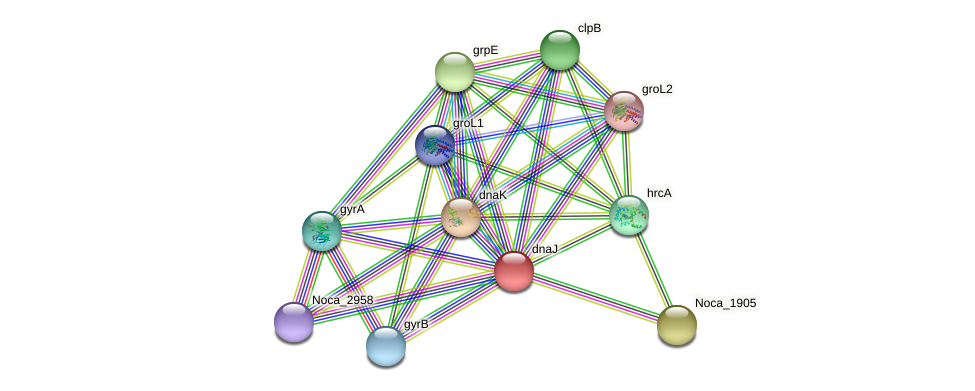Noca_1904 protein (Nocardioides sp. JS614) - STRING interaction network