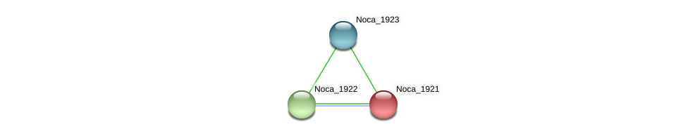Noca_1921 protein (Nocardioides sp. JS614) - STRING interaction network