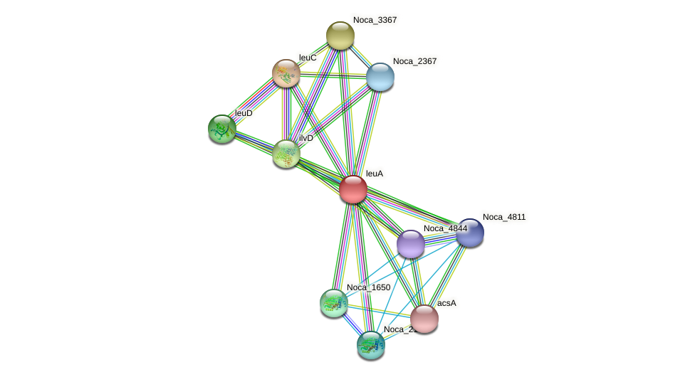 leuA protein (Nocardioides sp. JS614) - STRING interaction network