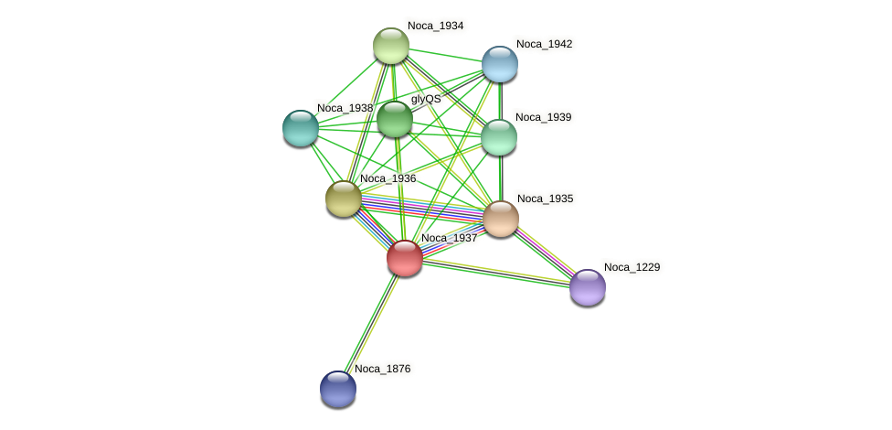Noca_1937 protein (Nocardioides sp. JS614) - STRING interaction network