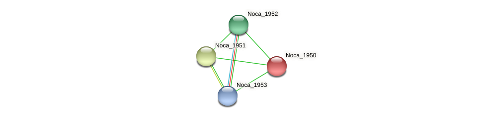 Noca_1950 protein (Nocardioides sp. JS614) - STRING interaction network