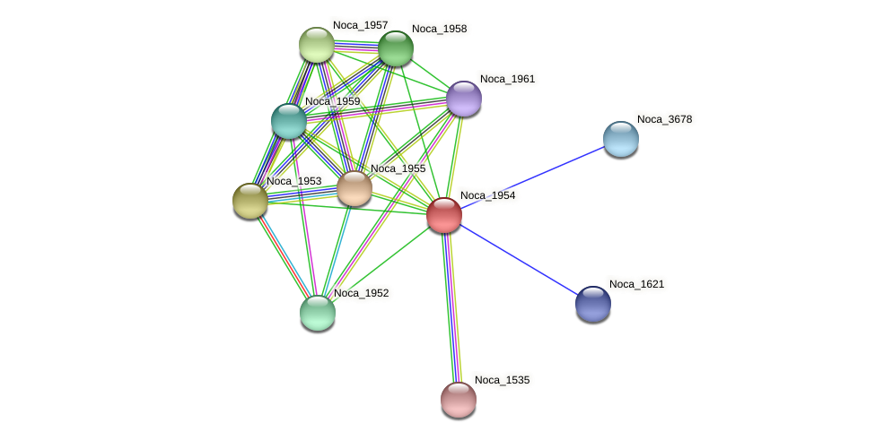 Noca_1954 protein (Nocardioides sp. JS614) - STRING interaction network