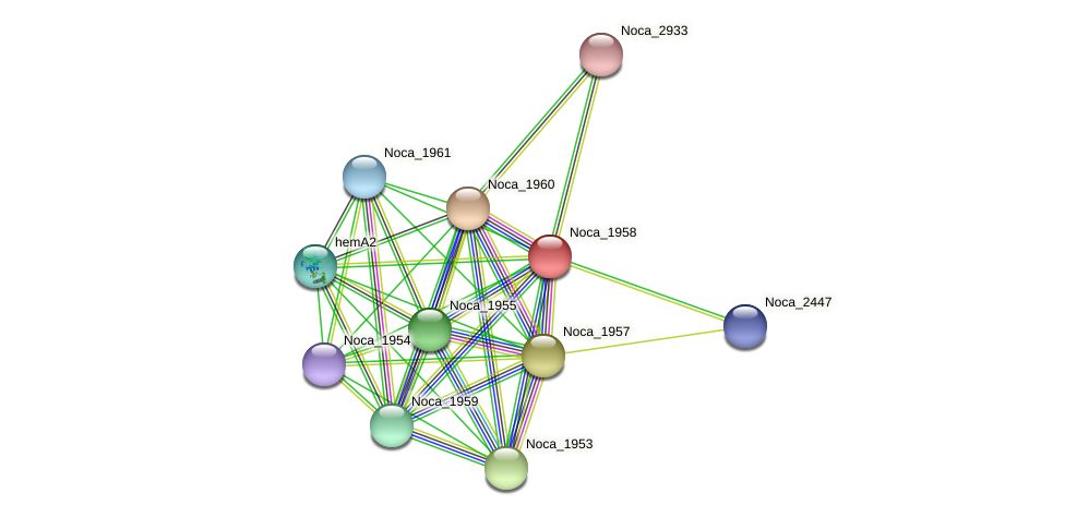 Noca_1958 protein (Nocardioides sp. JS614) - STRING interaction network