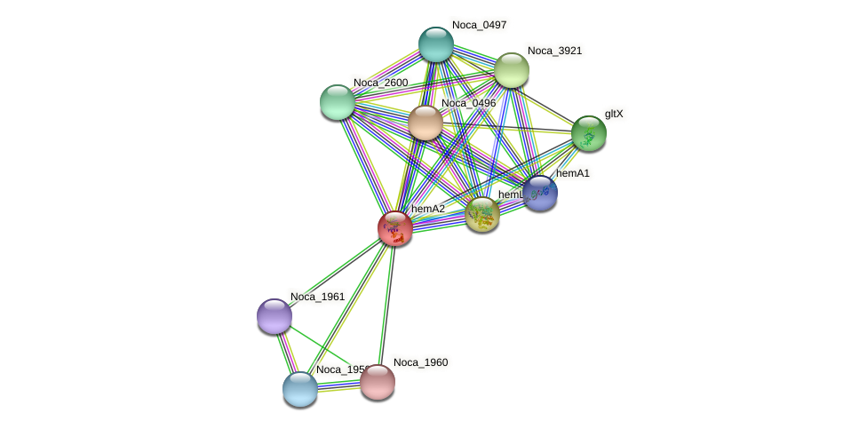 hemA2 protein (Nocardioides sp. JS614) - STRING interaction network