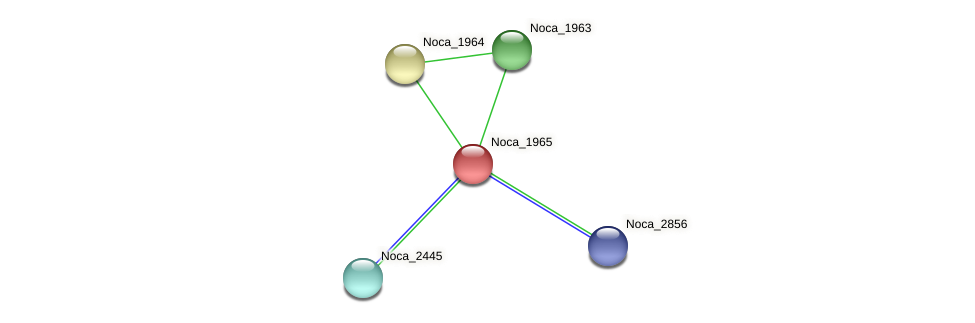 Noca_1965 protein (Nocardioides sp. JS614) - STRING interaction network