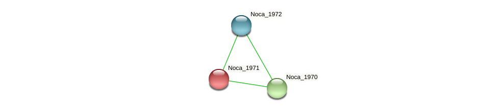 Noca_1971 protein (Nocardioides sp. JS614) - STRING interaction network