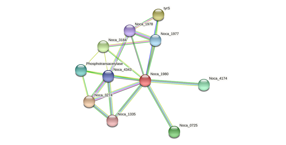 Noca_1980 protein (Nocardioides sp. JS614) - STRING interaction network
