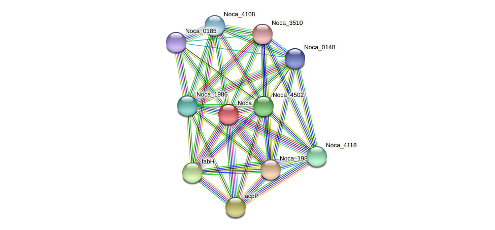 Noca_1990 protein (Nocardioides sp. JS614) - STRING interaction network