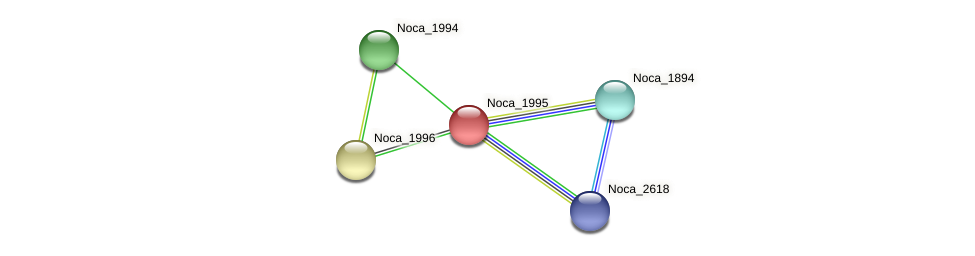Noca_1995 protein (Nocardioides sp. JS614) - STRING interaction network