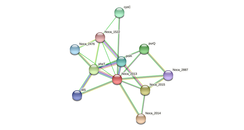 Noca_2013 protein (Nocardioides sp. JS614) - STRING interaction network