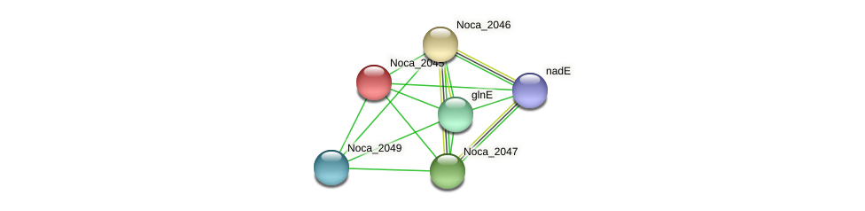 Noca_2045 protein (Nocardioides sp. JS614) - STRING interaction network
