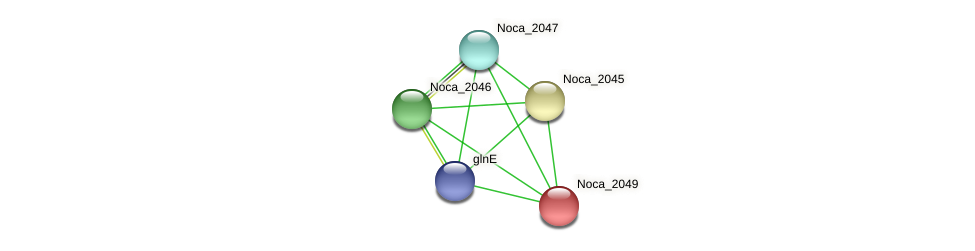 Noca_2049 protein (Nocardioides sp. JS614) - STRING interaction network