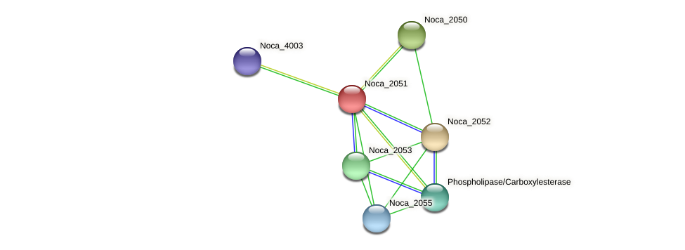 Noca_2051 protein (Nocardioides sp. JS614) - STRING interaction network