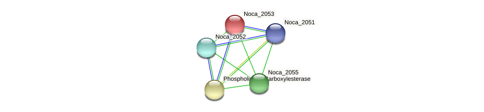 Noca_2053 protein (Nocardioides sp. JS614) - STRING interaction network