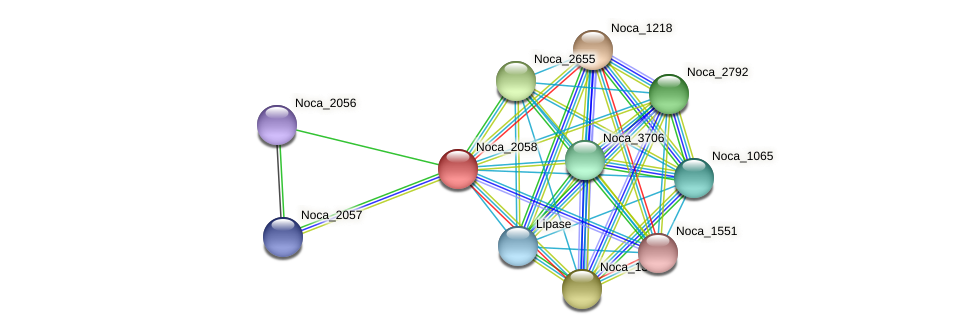 Noca_2058 protein (Nocardioides sp. JS614) - STRING interaction network