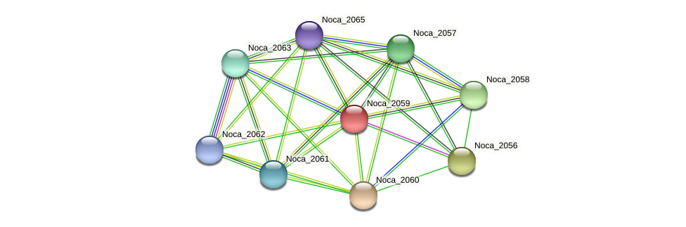 Noca_2059 protein (Nocardioides sp. JS614) - STRING interaction network